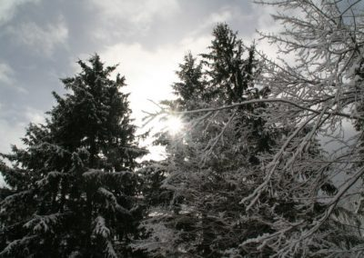 winter_sun_trees_356